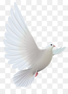 Water Bird png free download - Facebook Background - White