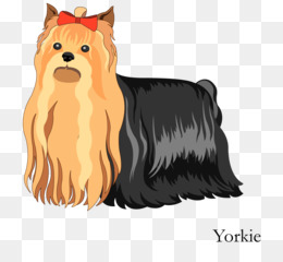 Yorkshire png free download - Yorkshire Terrier Boston Terrier