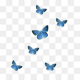 Blue Butterfly Png Blue Butterfly Transparent Clipart Free