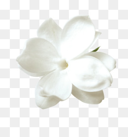 White Flowers Png White Flowers Transparent Clipart Free Download