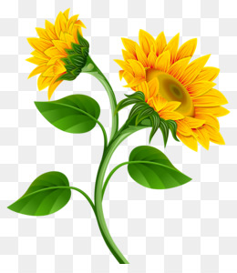 Common sunflower Clip art