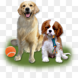 66ae41f9bff Spaniel Puppy PNG   Spaniel Puppy Transparent Clipart Free Download - Cavalier  King Charles Spaniel Puppy Dog breed Companion dog.
