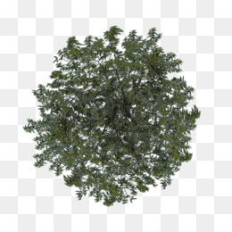 Christmas Tree Top View.Tree Top View Png Free Download Tree Plan Tree Top View