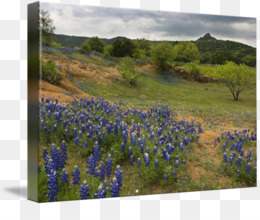 Texas Hill Country Lake Buchanan Willow City Loop Bluebonnet Inks Lake