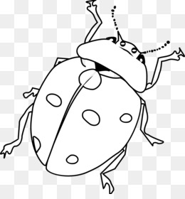 Drawing Line Art Black And White Clip Art Grouchy Ladybug