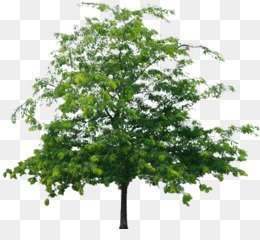 Tree Plant png free download - Medical cannabis Staff of Hermes